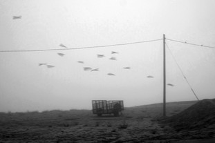 FOG, POLE, WIRES, CART AND BLACK BIRDS