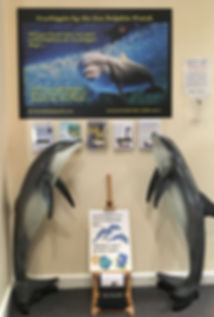 dolphininformationcentre122018.jpg