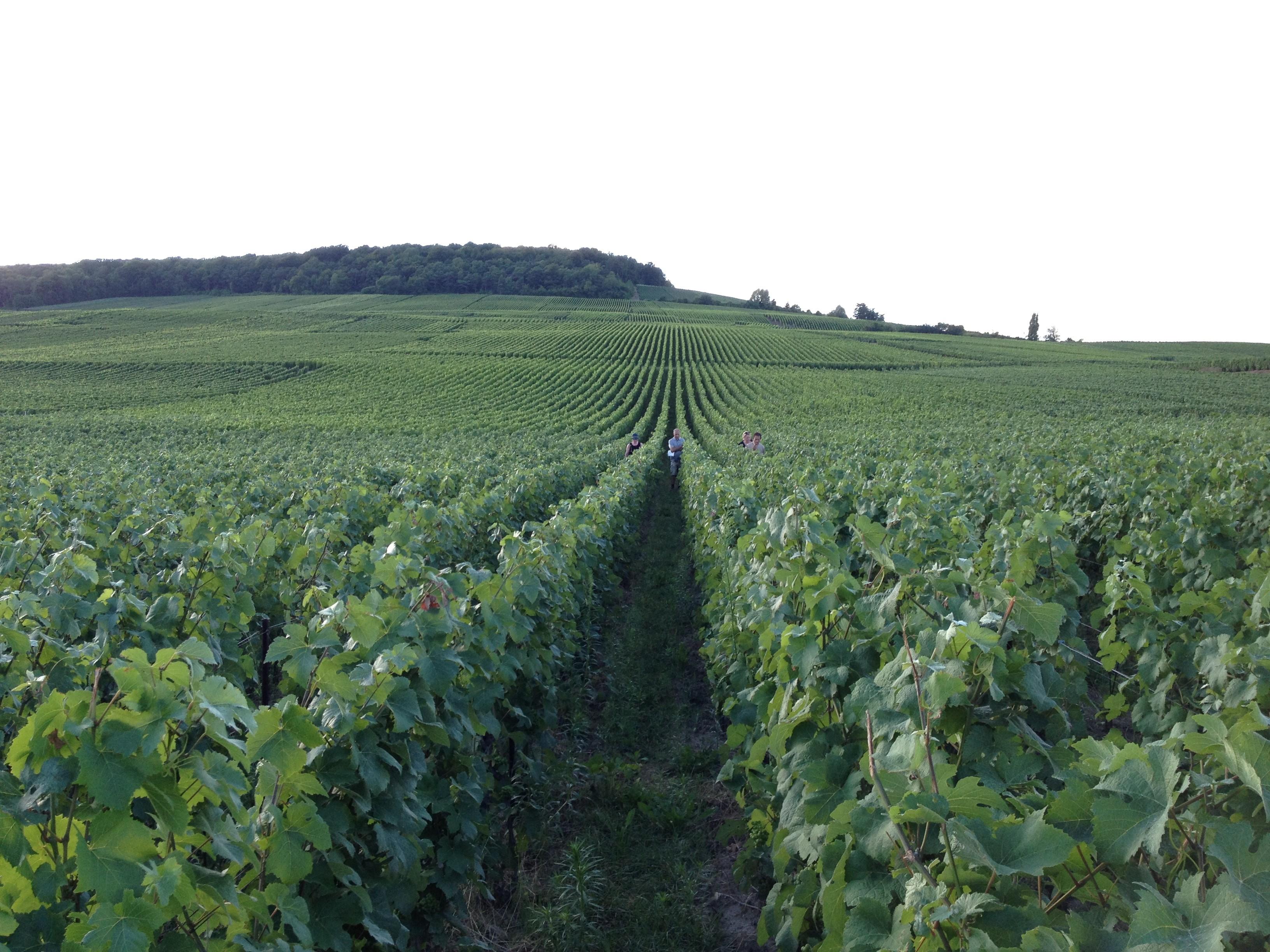 Champagne Vineyards.jpg