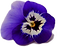 flor%20de%20pensamiento_edited.png