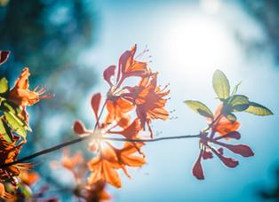 ¿Pueden las plantas absorber sabores?