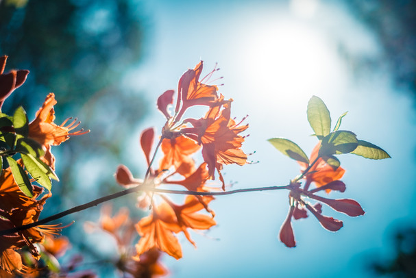 Orange Blossom 秋の気配