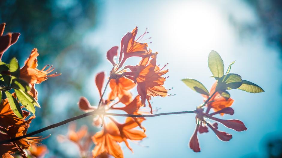 Sobre sentimentos e natureza