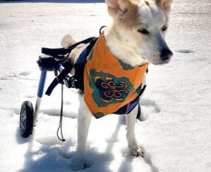 Cães amputados inspiram pessoas e levam alegria para crianças deficientes