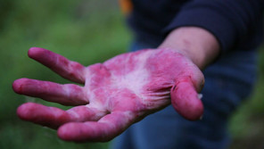 foraging for blueberries in Finland