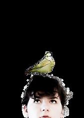 mn bird.png