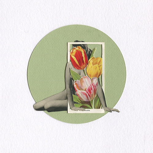 Tulips, 6 in x 6 in