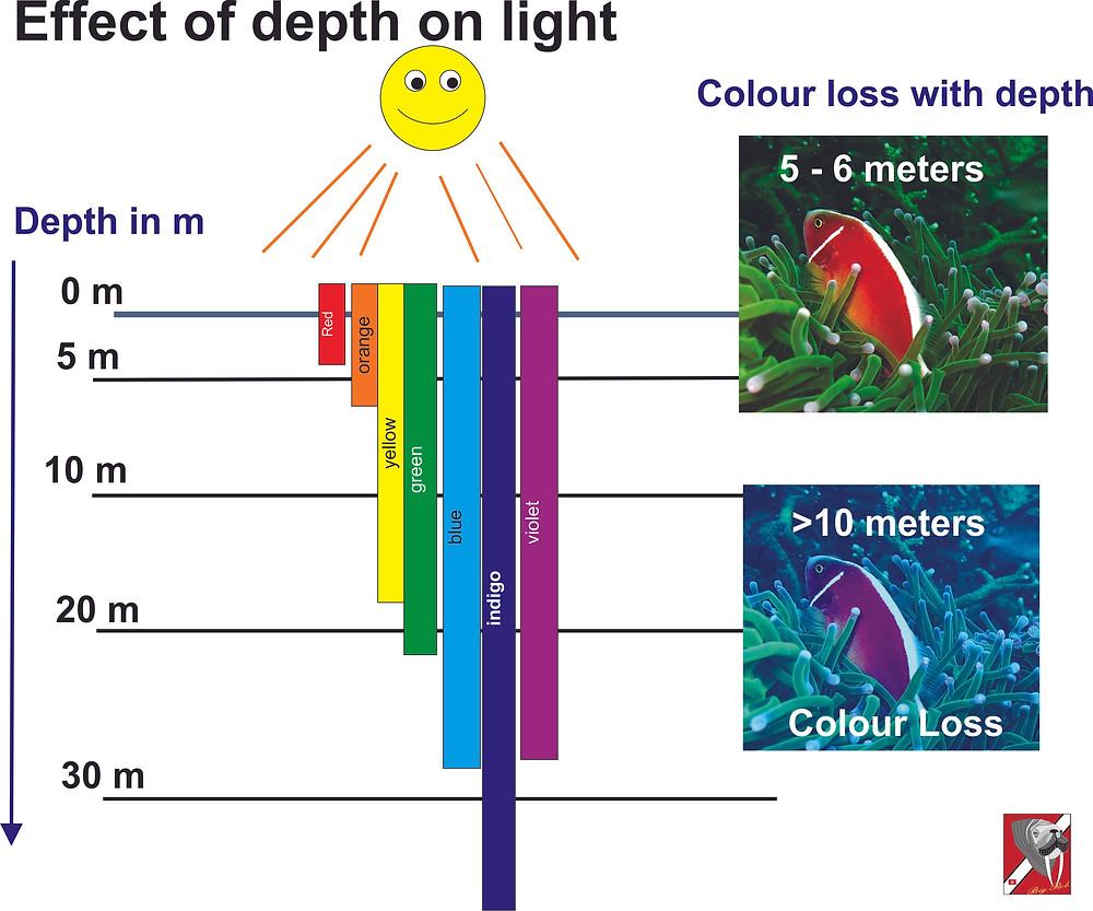 Colour Loss