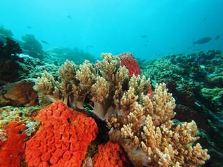 Spotlight on the Master Scuba Diver Challenge