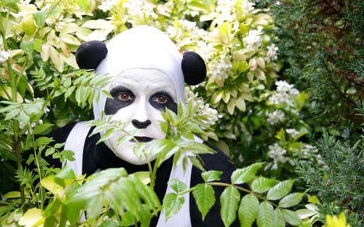 British Panda