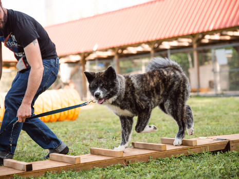 Just Fur Fun Agility at the Oromocto SPCA