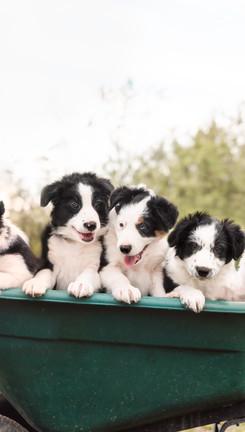 PBC-Pups_6weeks.jpg