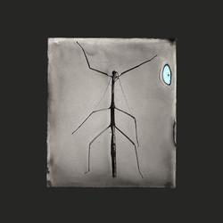 Ferrotipo, 8 x 7 cm, 2017