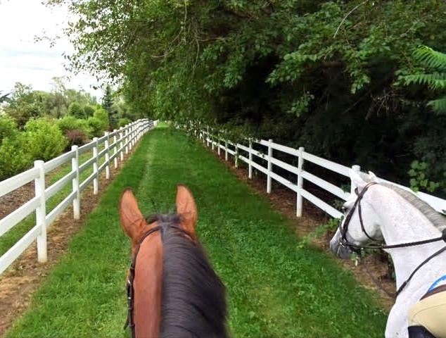 Bridle Path Trails