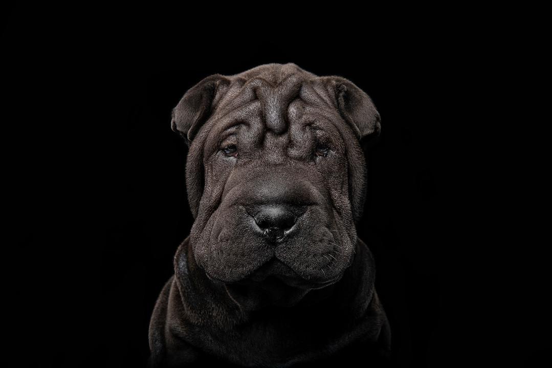 wrinkles_sized.jpg
