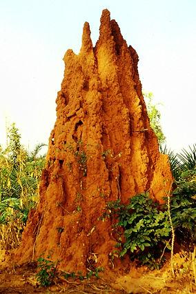 Vie au Bénin