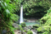 the-emerald-pool-dominica.jpg