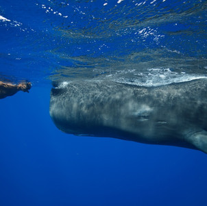 Swimming with the Whales