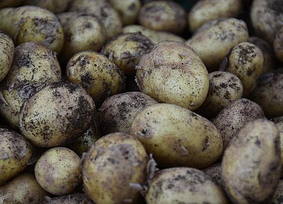 Pomme de terre Ditta Bio - 1kg - 297km
