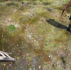Rural Water Tank Clean - Before