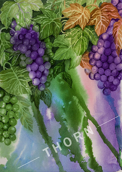 Grapes by Karen Thornberg