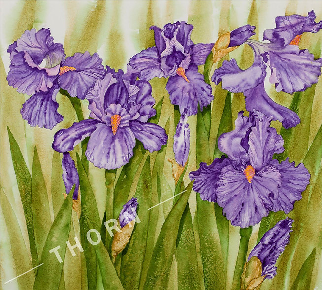 Iris by Karen Thornberg