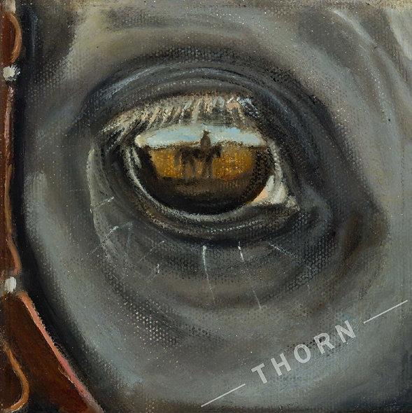 Reflexion of Cowboy In Horse's Eye by Brian McNicholas