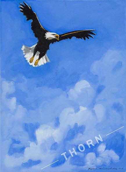 Eagle in Flight by Brian McNicholas