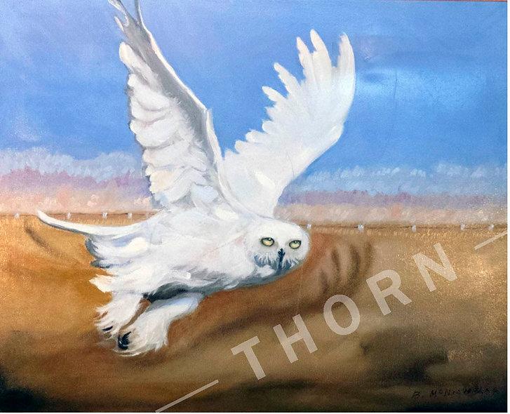 White Owl by Brian McNicholas