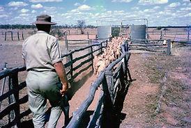 Sheep Run.JPG