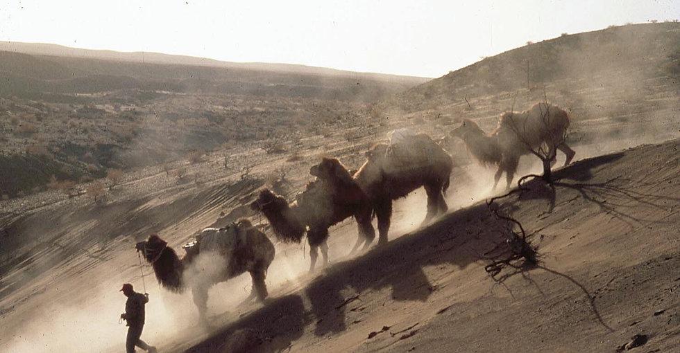 camels on slope.jpg