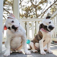 Duke & Lucy 14 weeks.jpg
