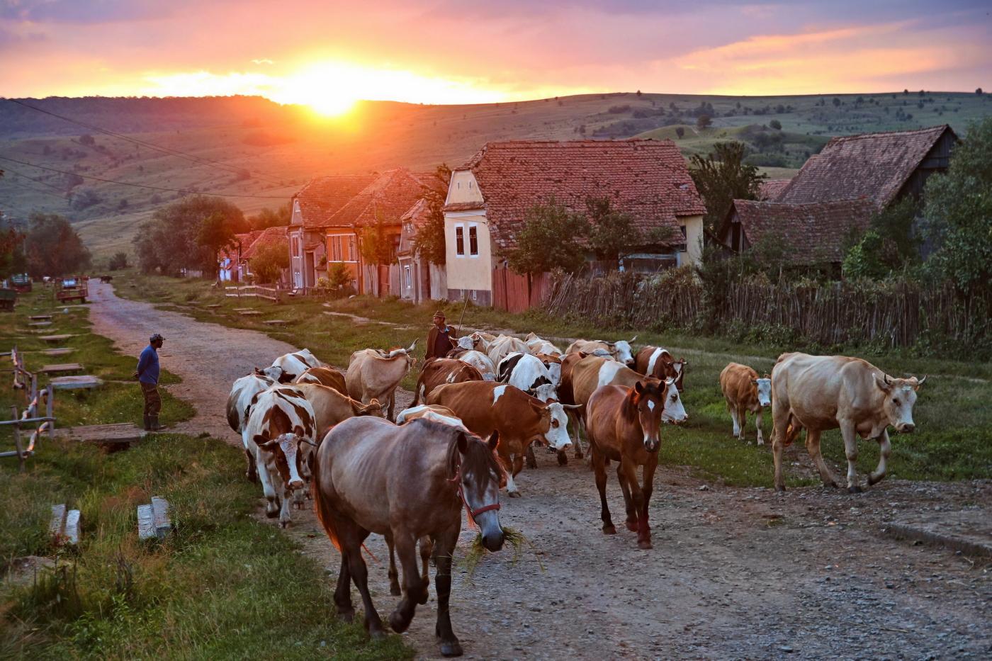 Viscri, Romania - Morning Rush
