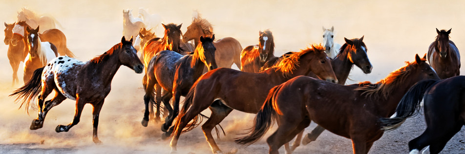Morning run - White Stallion Ranch, Tucson, AZ