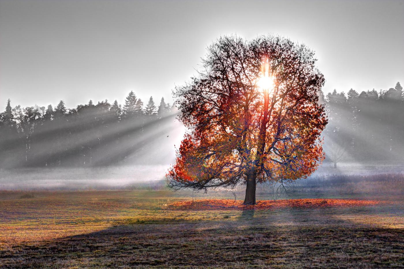 Neamt, Romania - Sunset Tree