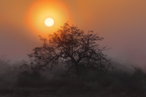 Foggy desert sunrise - Laveen, Arizona