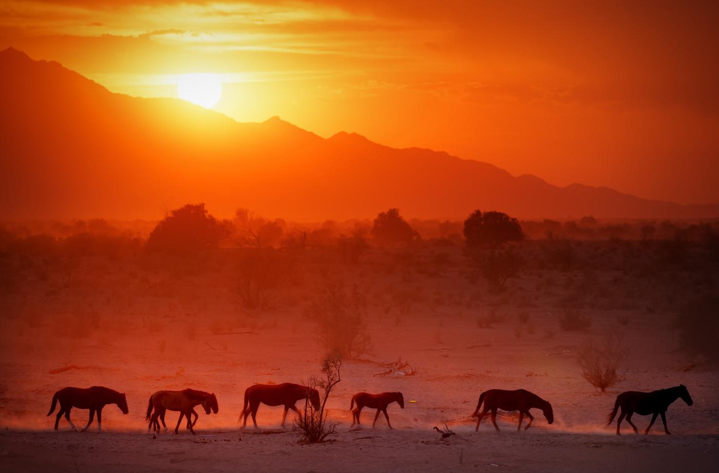Gila River, Arizona - Wild Horses