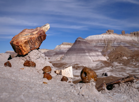 A Walk Into The (Petrified) Forest... What Forest?
