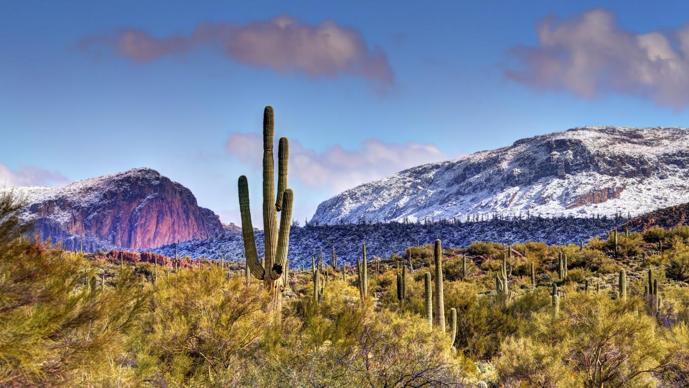 Apache Junction, AZ - Cacti and Snow