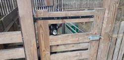 Les seniors à la chèvrerie