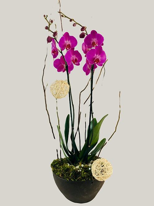 Románticas orquídeas