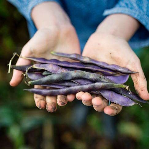 Harvest Share Sunday