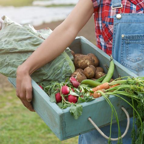 Garden Produce Sale