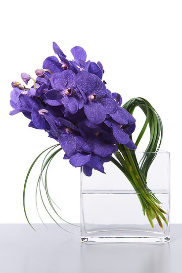 Vanda Orchid Bunch