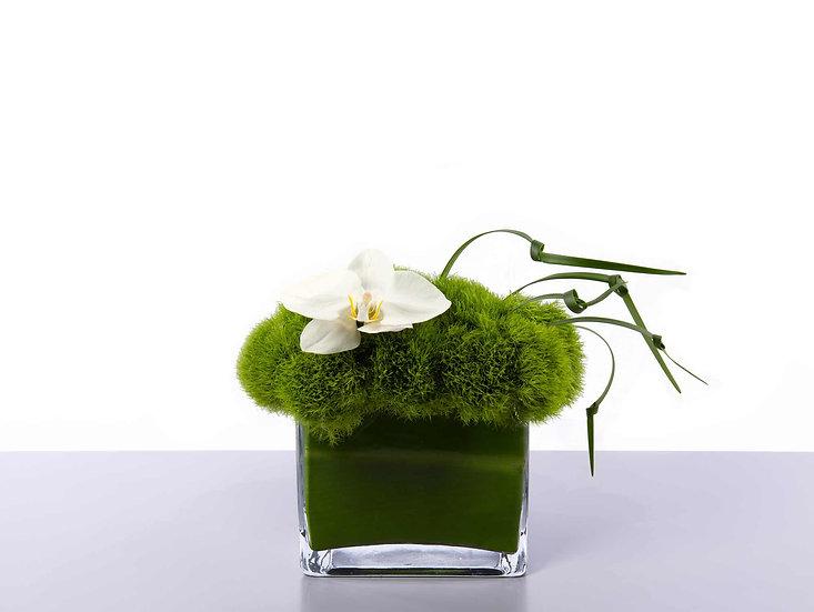 Green Trix