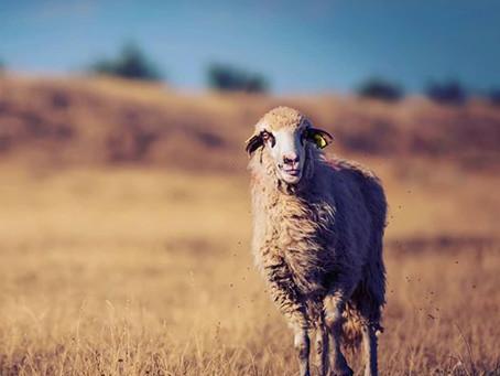 Sobre ser pastor há 15 anos