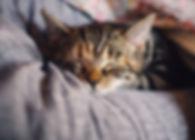 cat-4189697_1920.jpg