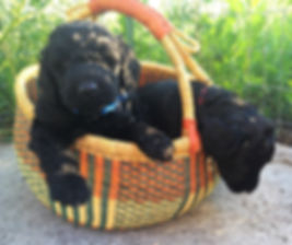 New Mexico puppies for sale