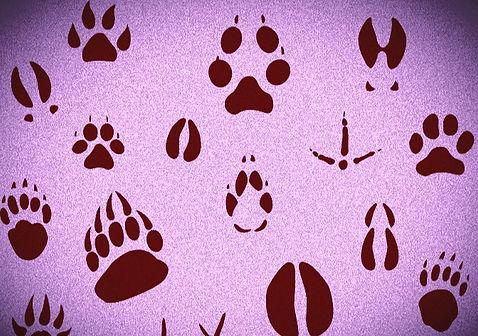 papiers-peints-empreintes-animal_edited.