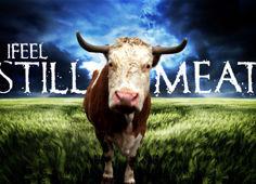 IFEEL - STILL MEAT